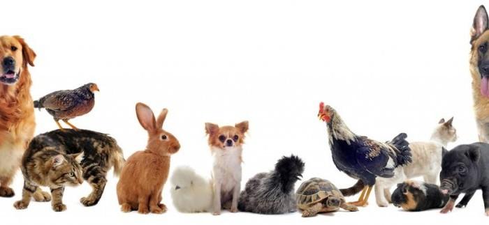 animaux domestiques une passion des enfants