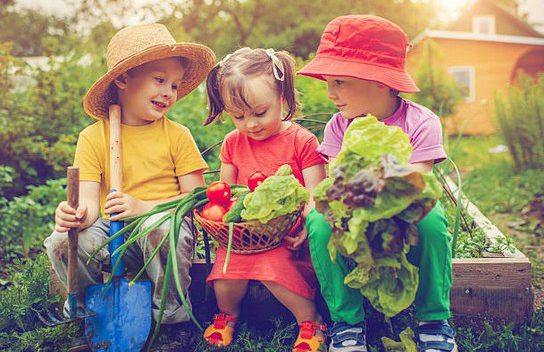 Cr er un jardin potager avec ses enfants plan te famille - Creer un jardin potager ...